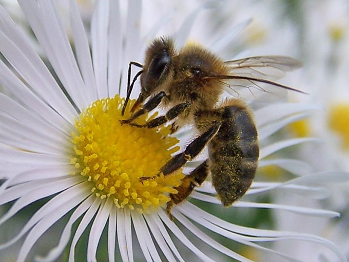 una-abeja